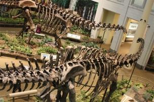 ApatosaursDiplodocus1