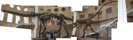 ArgentinosaurusCompilation1
