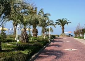 sochi-russia-palmtrees